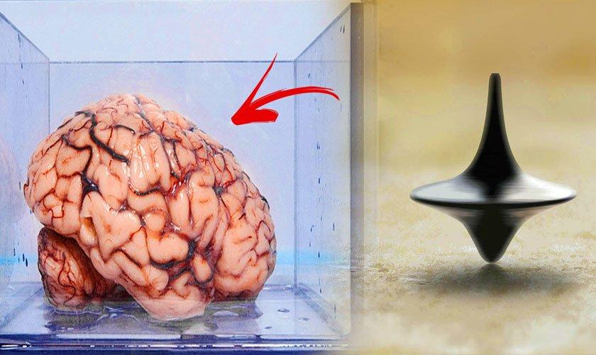 Sobre la teoría del cerebro en una cubeta