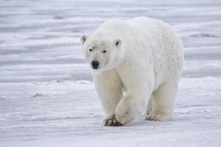 la-ultima-area-de-hielo-en-el-artico-cede-al-calentamiento-global