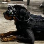 el-ejercito-estadounidense-esta-probando-realidad-aumentada-en-perros