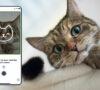 si-tienes-gato-checa-esta-app-que-te-dice-si-se-siente-bien